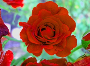 GW Rose Red