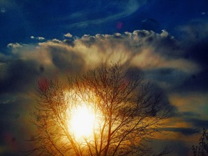 Sunrise Tree copy small